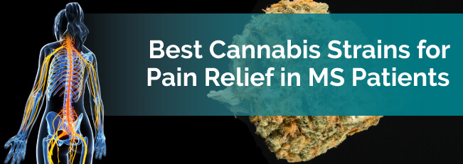 Best cannabis strain for multiple sclerosis