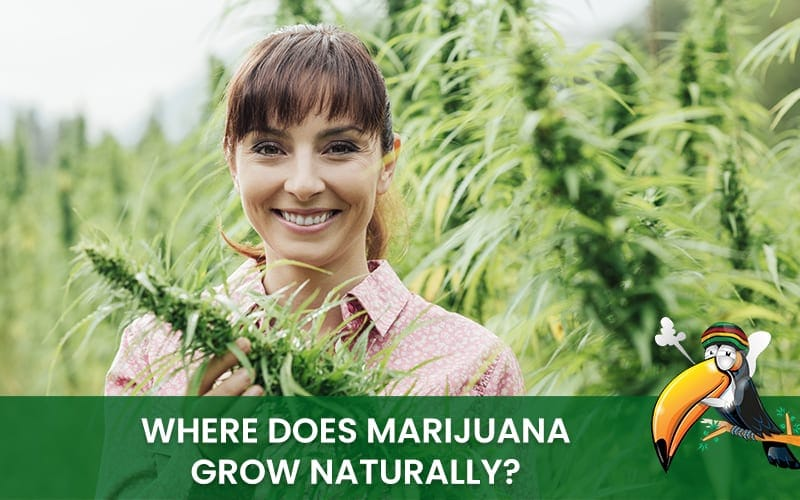 Where does weed grow