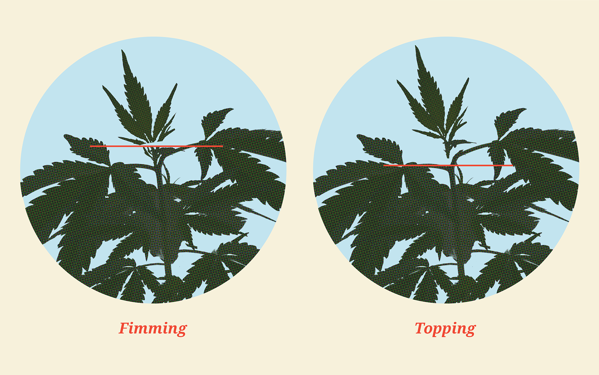 When to top outdoor plants