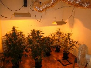 Setting up a grow room step by step