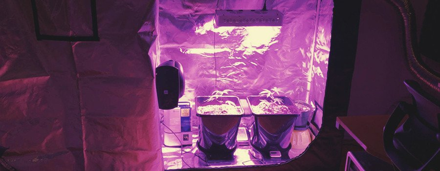 Light cycle for cannabis seedlings