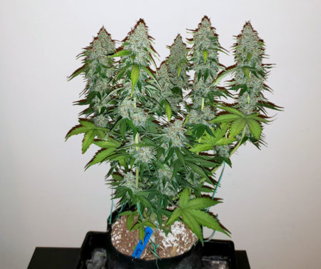 What you need to grow weed indoors cheap