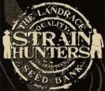 Strain hunters money maker