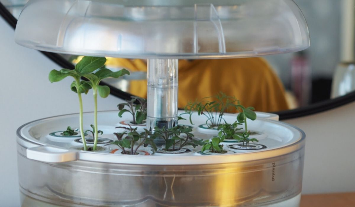 How to speed up plant growth
