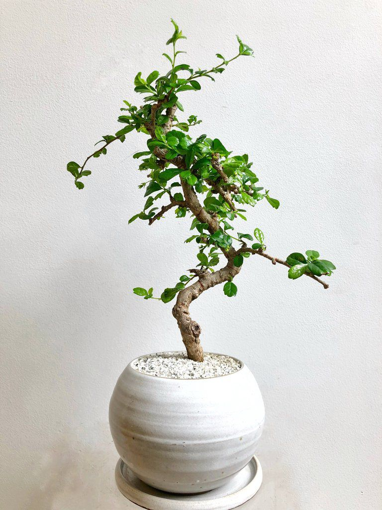 Where to buy plants in chicago