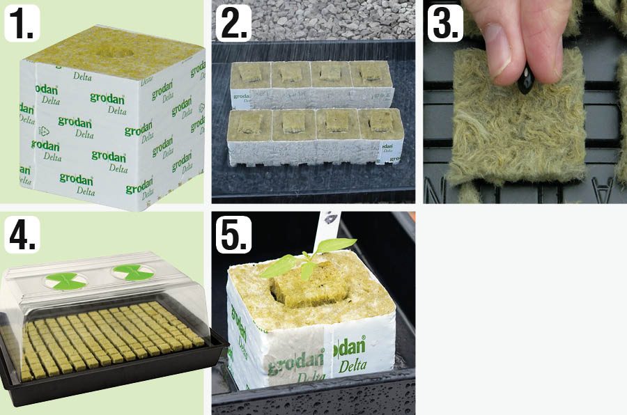 Hydroponics from seed