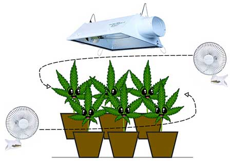 Things you need to grow weed indoors