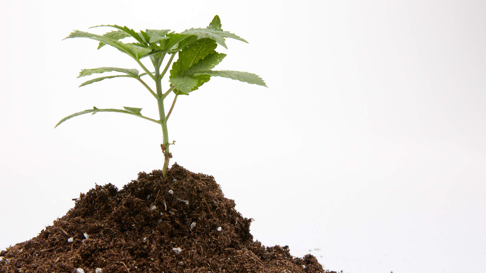 Best store bought soil for cannabis